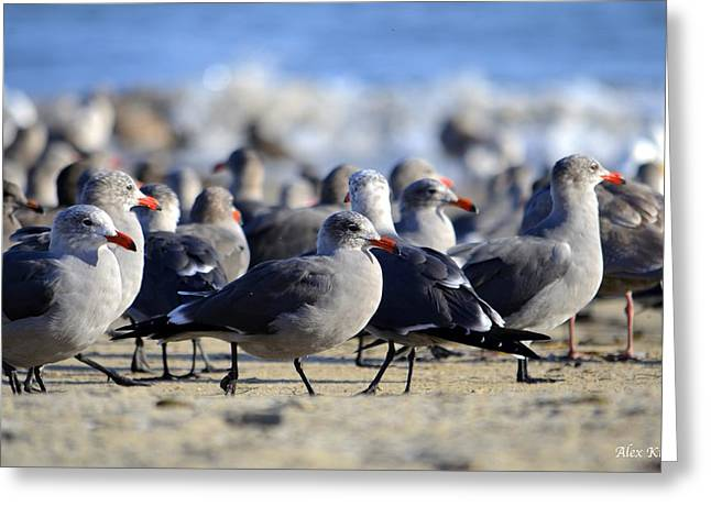 Red Beak Seagull Convention Greeting Card by Alex King