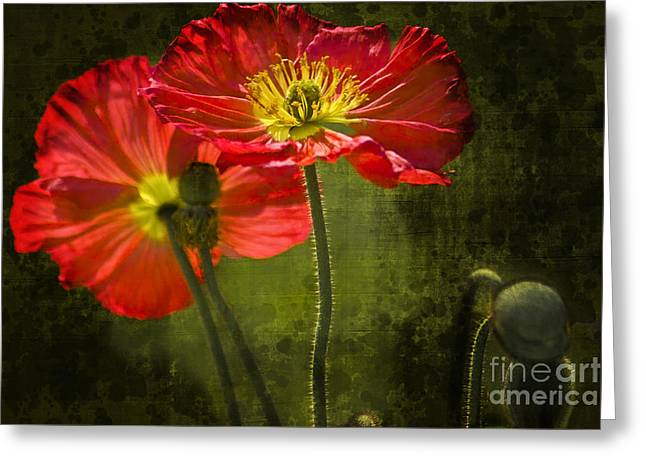 Red Beauties In The Field Greeting Card by Heiko Koehrer-Wagner