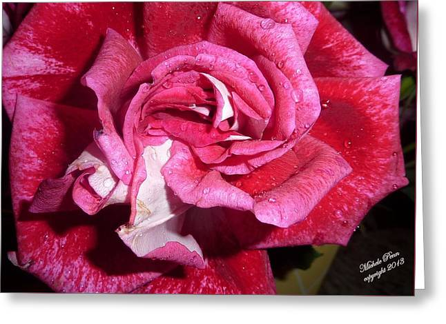 Red Beauty 2  Greeting Card