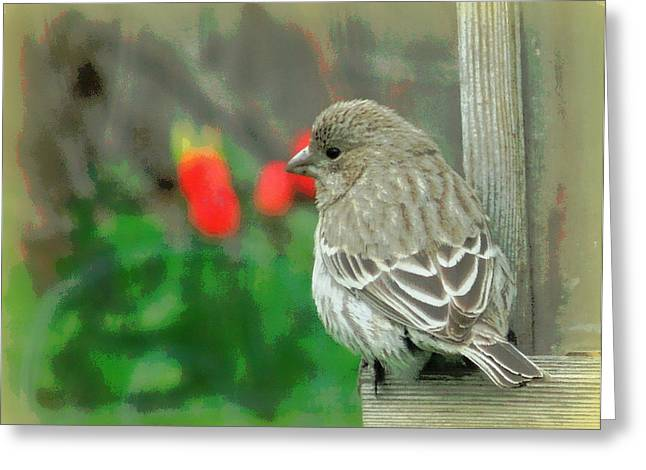 Red Behind Little Beak Greeting Card by Heidi Manly