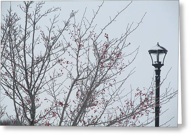Red Berries And Lamppost Greeting Card by Tina M Wenger
