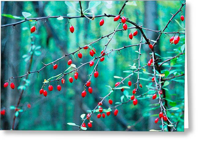 Red Berries In October Greeting Card