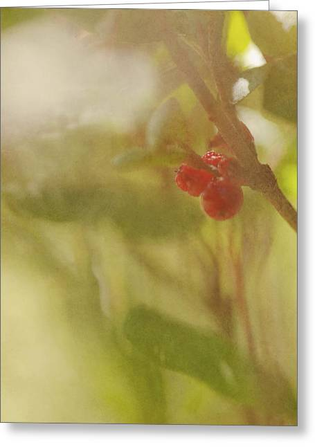 Red Berries Of The Bog Cranberry Greeting Card by Roberta Murray