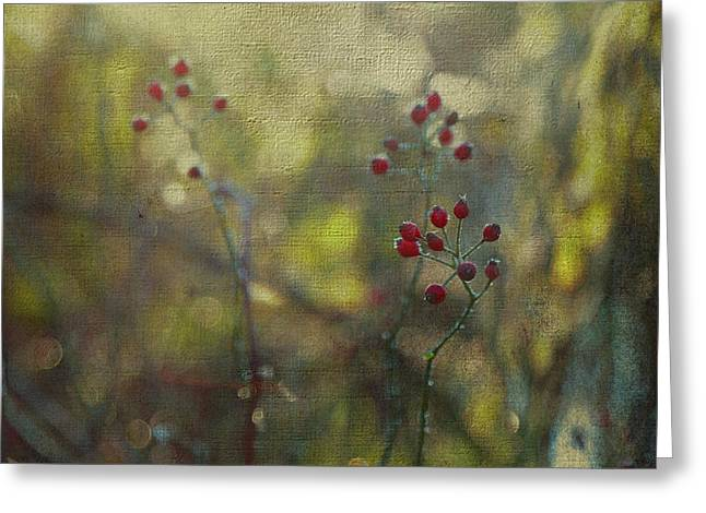 Red Berries On Green After Frost Greeting Card