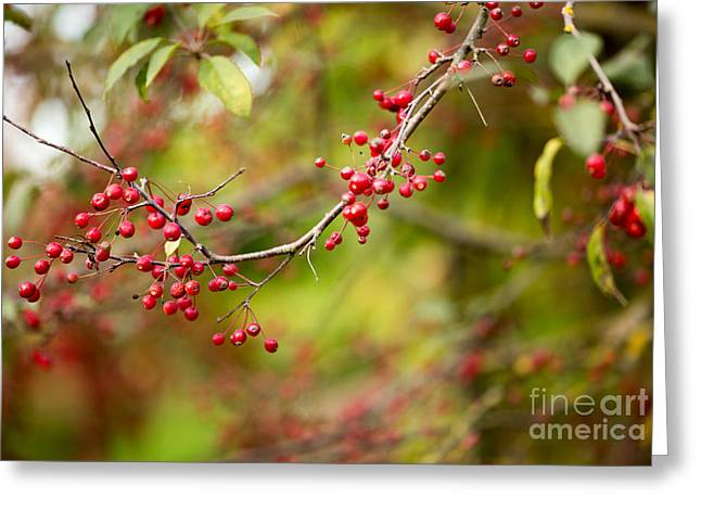Red Berries Greeting Card by Rebecca Cozart