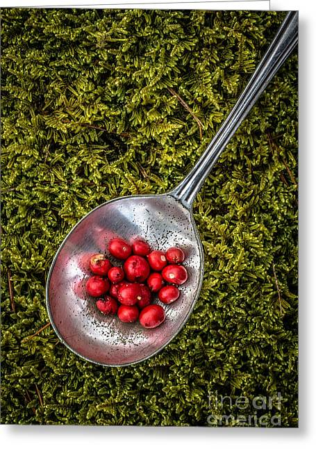 Red Berries Silver Spoon Moss Greeting Card by Edward Fielding