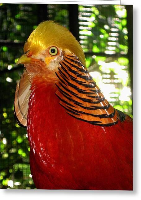 Red Bird Greeting Card by Pamela Walton