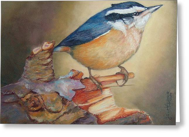 Red-breasted Nuthatch Bird Greeting Card