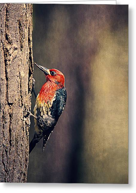 Red-breasted Sapsucker Drilling Holes  Greeting Card by Maria Angelica Maira
