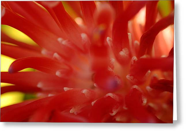 Greeting Card featuring the photograph Red Bromeliad by Greg Allore