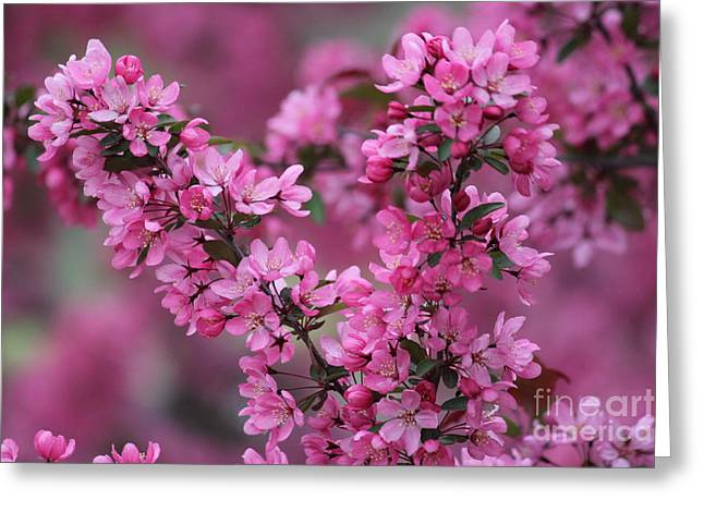 Red Bud Blossoms Greeting Card by Theresa Willingham