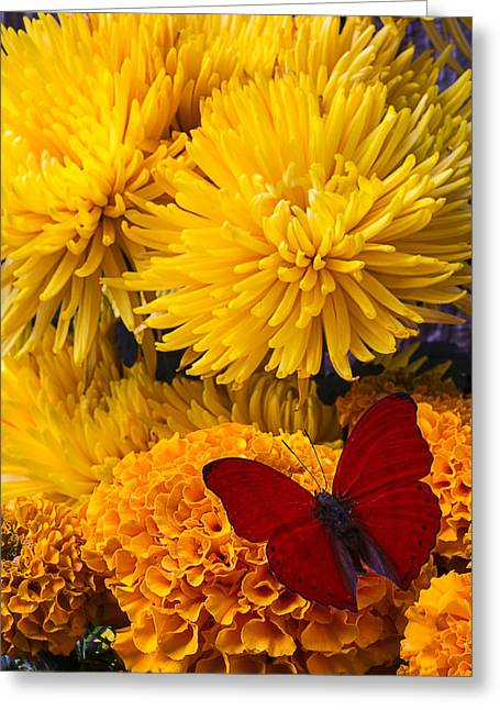 Red Butterfly On African Marigold Greeting Card by Garry Gay