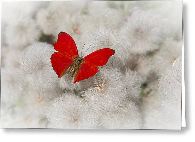 Red Butterfly On Flower Fluff Greeting Card
