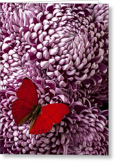 Red Butterfly On Red Mum Greeting Card by Garry Gay