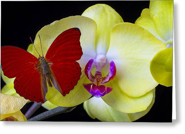 Red Butterfly On Yellow Orchid Greeting Card