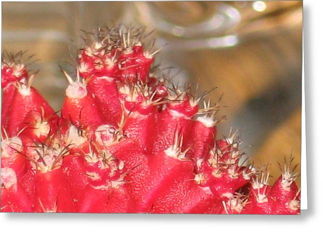 Red Cactus Greeting Card by Anais DelaVega