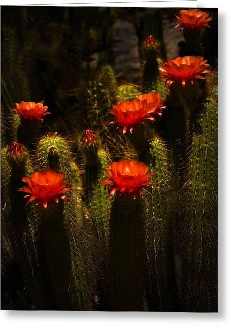 Red Cactus Flowers II  Greeting Card by Saija  Lehtonen
