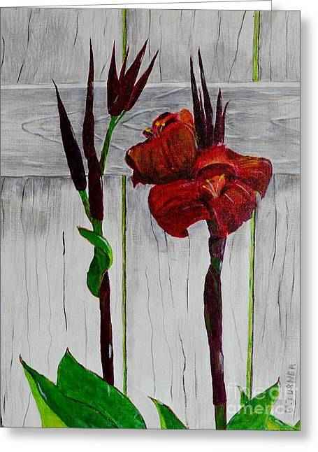 Red Canna Lily Greeting Card by Melvin Turner