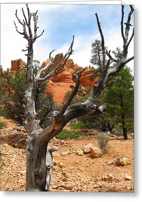 Red Canyon Tree And Rocks Greeting Card