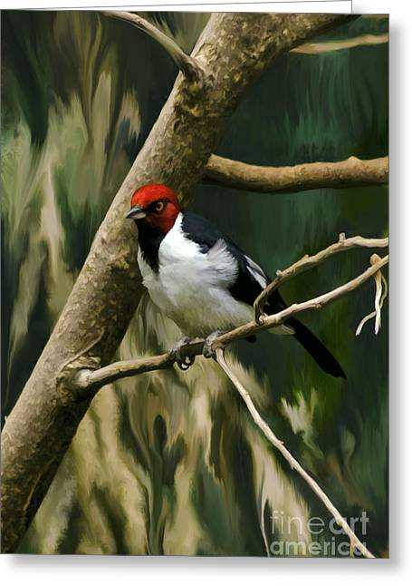 Red-capped Cardinal Greeting Card by Adam Olsen
