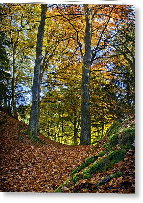Red Carpet In Reelig Glen During Autumn Greeting Card