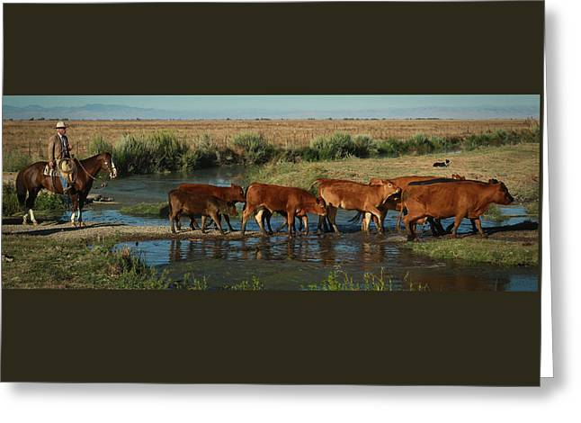 Red Cattle Greeting Card by Diane Bohna