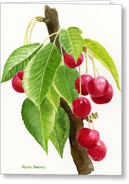 Red Cherries On A Branch Greeting Card by Sharon Freeman