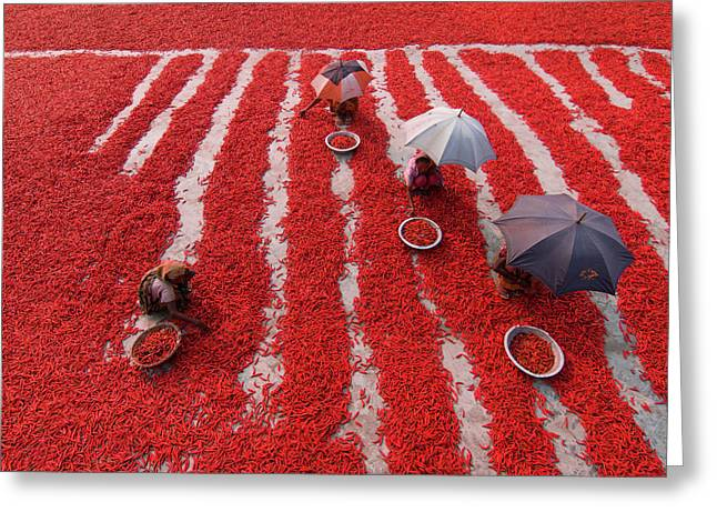 Red Chilies Pickers Greeting Card