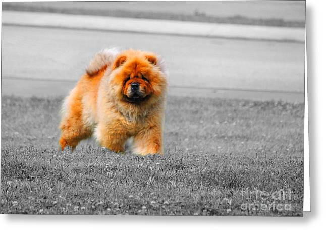Red Chow Greeting Card by Jai Johnson