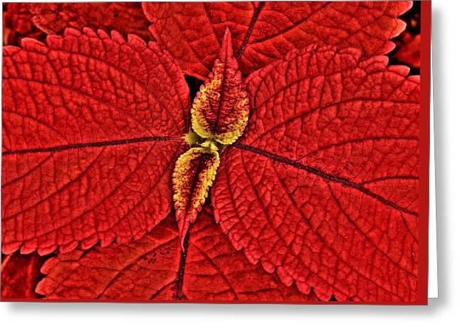 Red Coleus Greeting Card