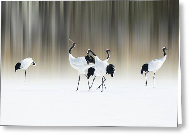 Red-crested White Cranes Greeting Card by Ikuo Iga