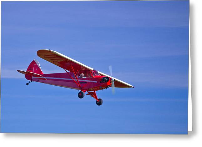 Red Cub Greeting Card