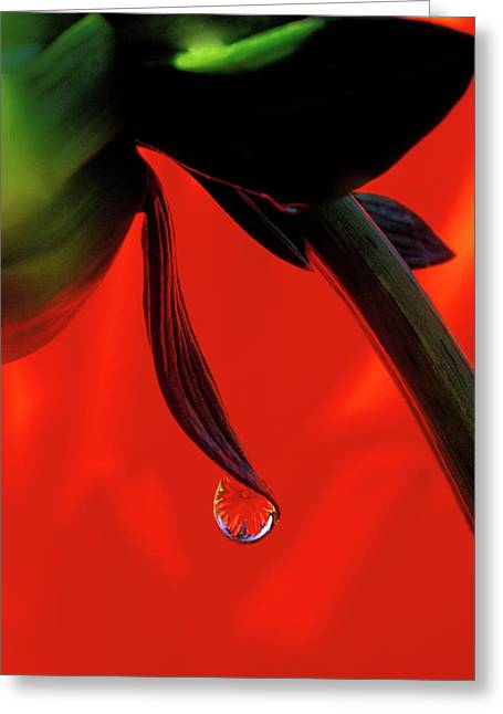 Red Dahlia In A Dew Drop Greeting Card by Jaynes Gallery