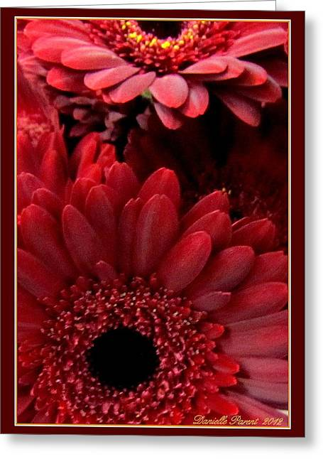Red Daisies Greeting Card by Danielle  Parent