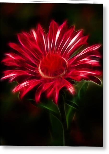 Red Daisy Greeting Card by Shane Bechler