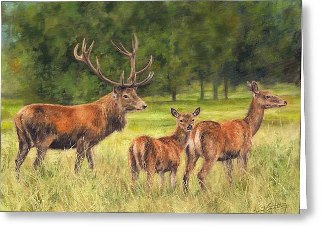 Red Deer Family Greeting Card by David Stribbling