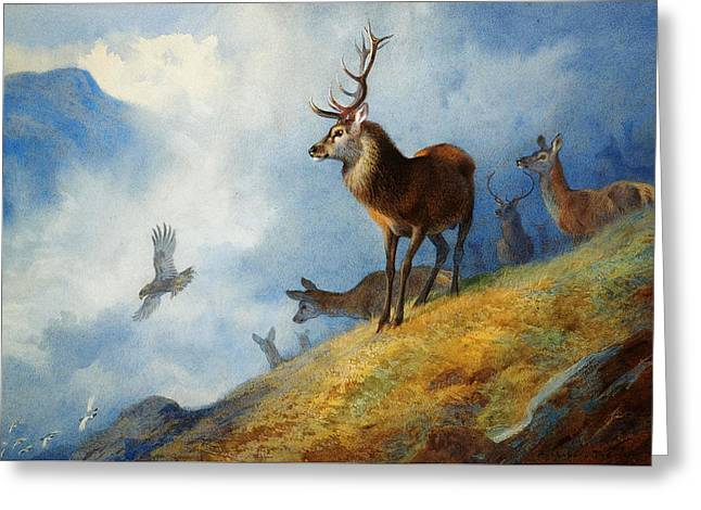 Red Deer Watching A Golden Eagle Hunt Greeting Card