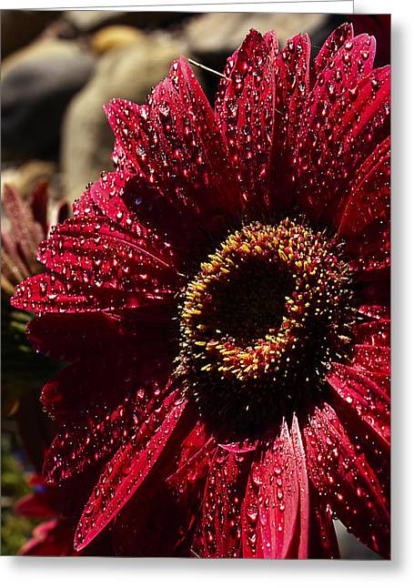 Greeting Card featuring the photograph Red Dew by Joe Schofield