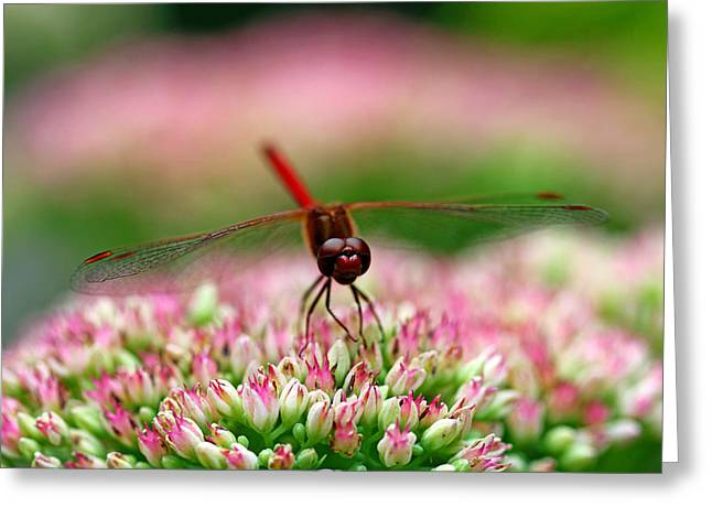 Red Dragon Greeting Card by Debbie Oppermann