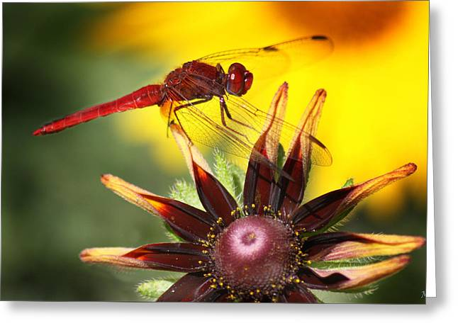 Red Dragonfly Greeting Card by Martina  Rathgens
