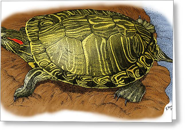Red Eared Slider Greeting Card by Roger Hall