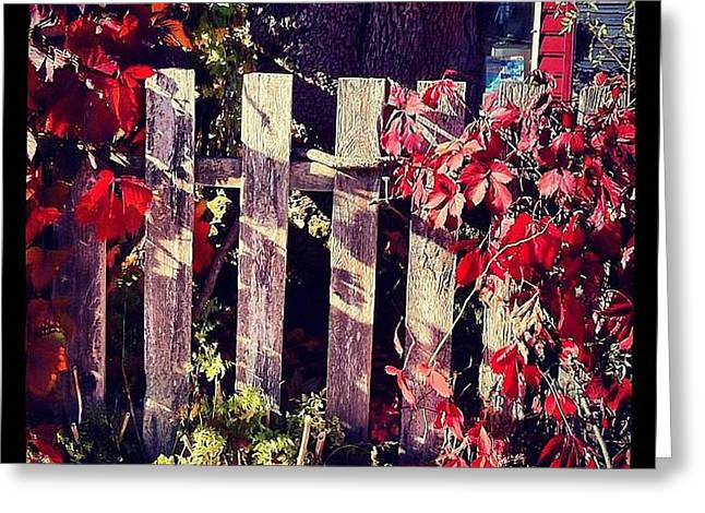 Red Entwined Fence  Greeting Card by Marcin and Dawid Witukiewicz