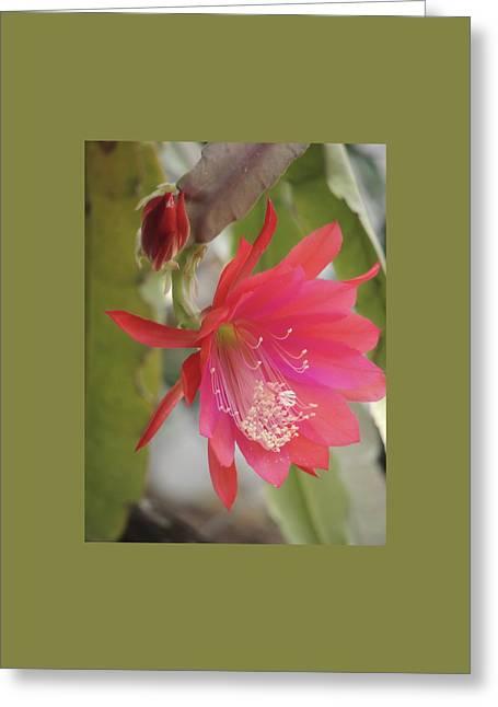 Red Epiphyllum Study Greeting Card