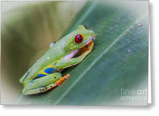Red Eyed Frog Greeting Card by Patricia Hofmeester