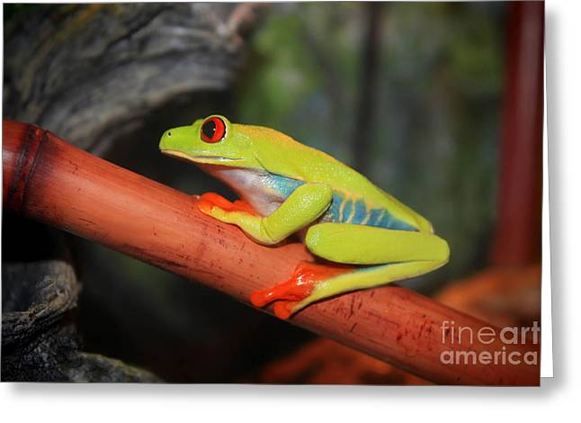 Red Eyed Tree Frog Greeting Card by Cathy  Beharriell