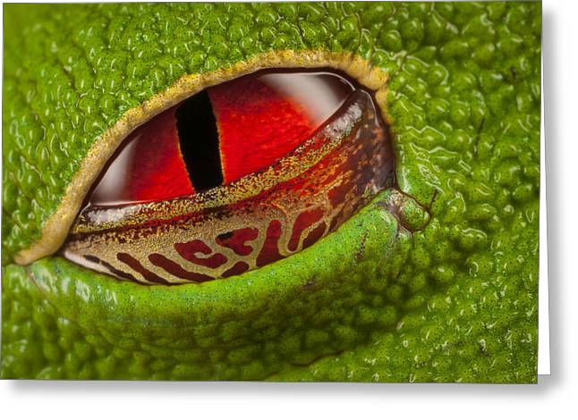 Red-eyed Tree Frog Closing Eyelid Greeting Card by Ingo Arndt