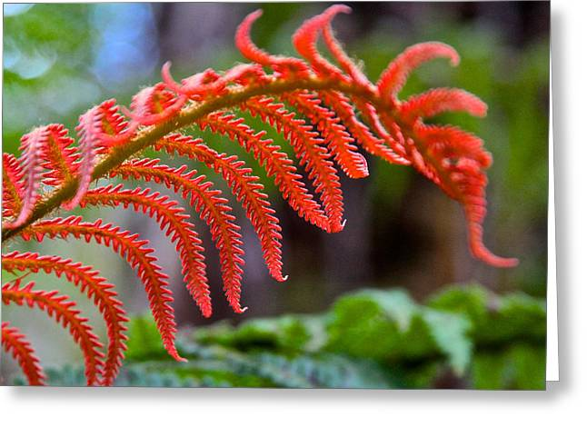Autumn Fern In Hawaii Greeting Card by Venetia Featherstone-Witty