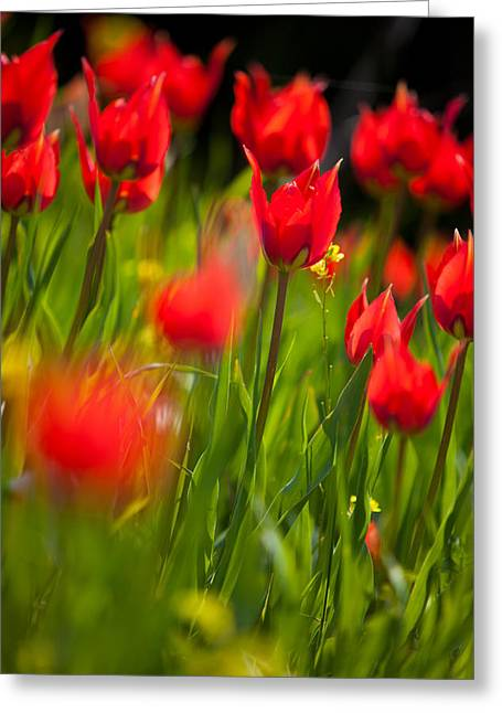Red Field Greeting Card by Emmanouil Klimis