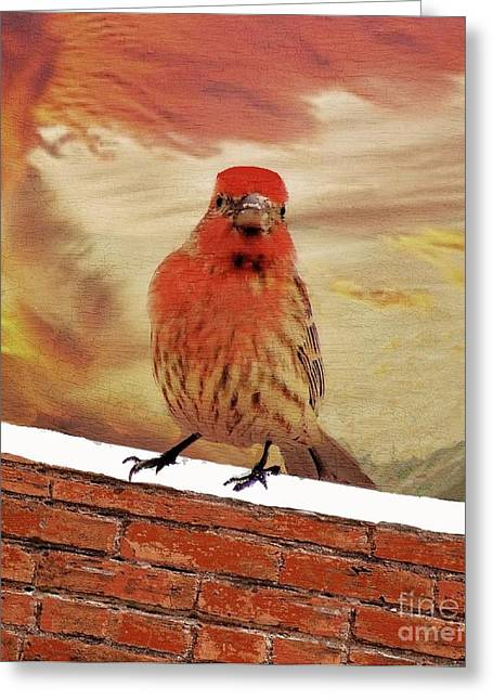 Red Finch On Red Brick Greeting Card by Janette Boyd