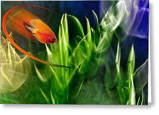 Red Fish In An Aquarium Greeting Card by   larisa Fedotova